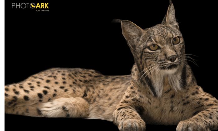 Por qué debes visitar la exposición Photo Ark National Geographic de Madrid